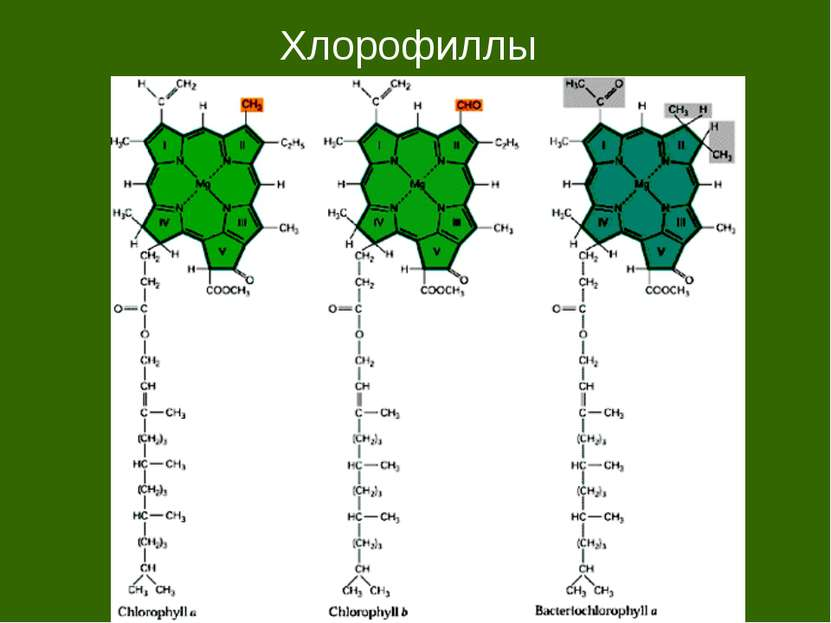 Хлорофиллы