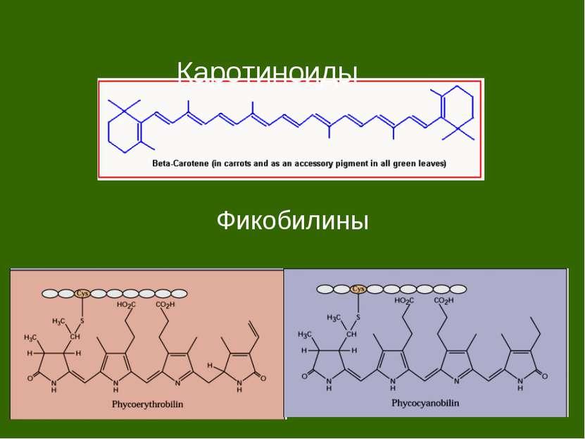 Каротиноиды Фикобилины