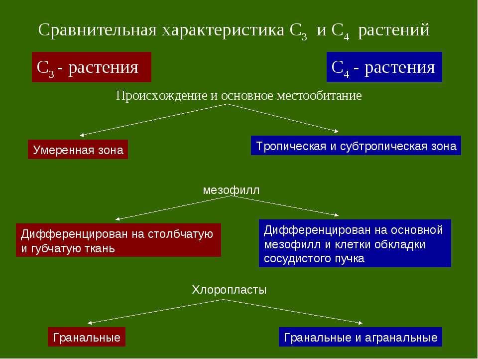 С3 - растения С4 - растения Сравнительная характеристика С3 и С4 растений Про...