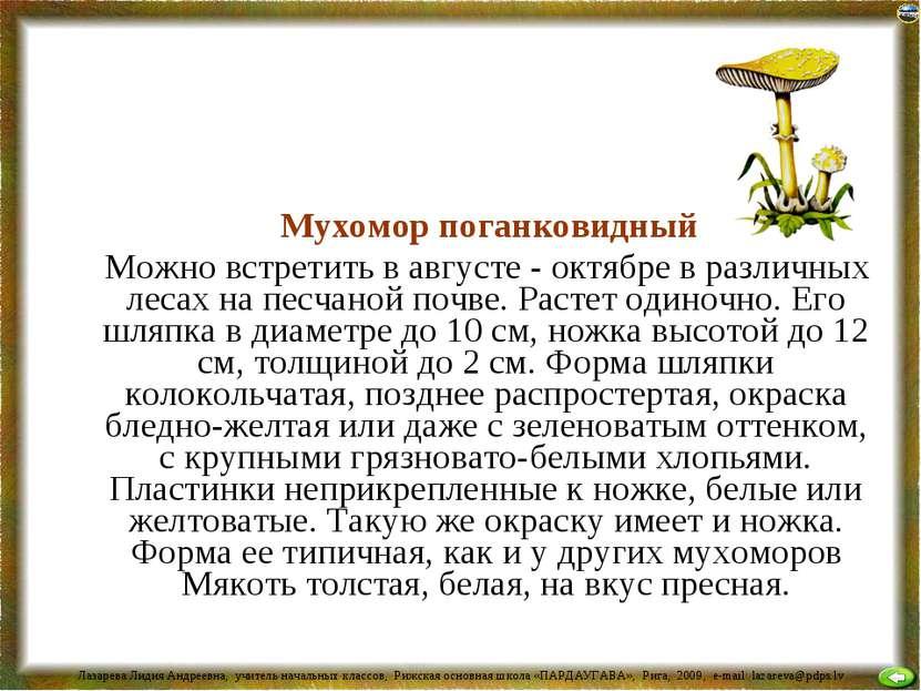 Мухомор поганковидный Можно встретить в августе - октябре в различных лесах н...