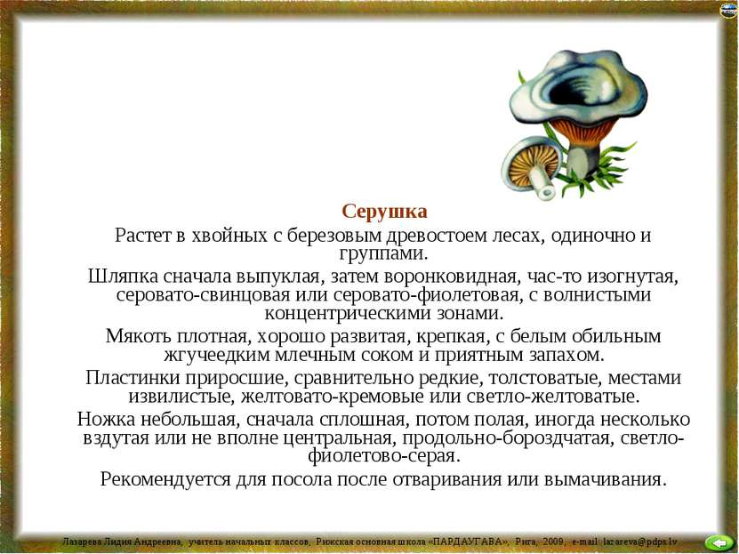 Серушка Растет в хвойных с березовым древостоем лесах, одиночно и группами. Ш...