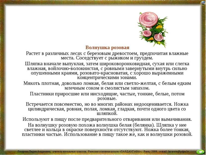 Волнушка розовая Растет в различных лесах с березовым древостоем, предпочитая...
