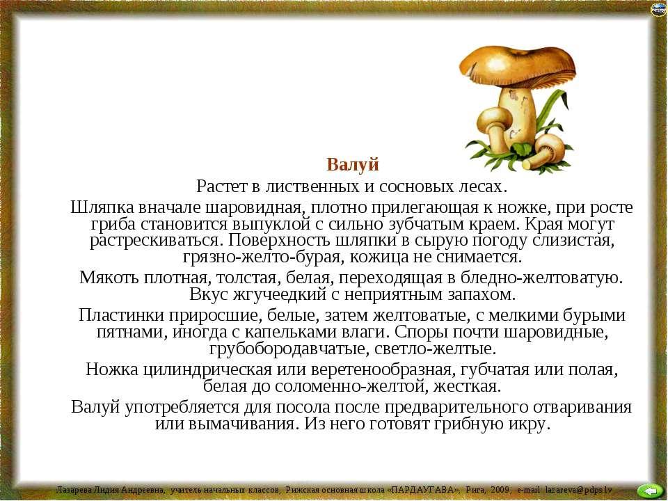Валуй Растет в лиственных и сосновых лесах. Шляпка вначале шаровидная, плотно...