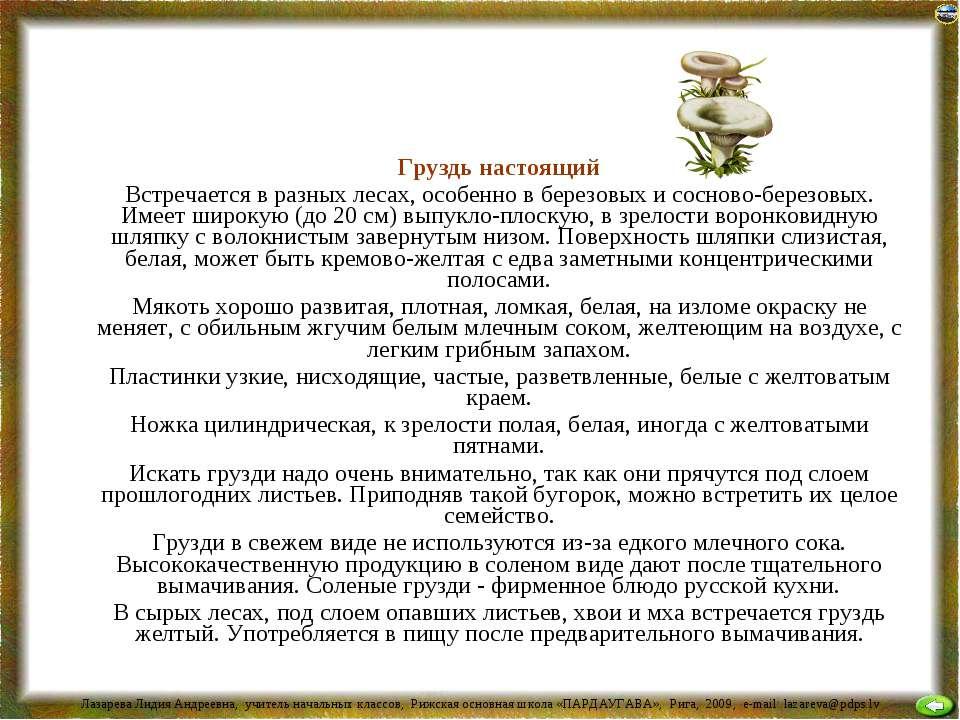 Груздь настоящий Встречается в разных лесах, особенно в березовых и сосново-б...