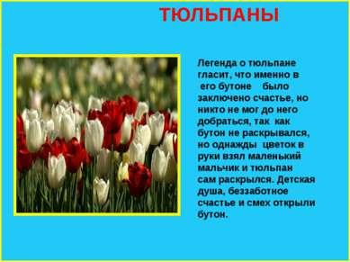 ТЮЛЬПАНЫ Легенда о тюльпане гласит, что именно в его бутоне было заключено сч...