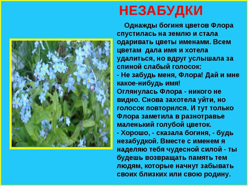 НЕЗАБУДКИ Однажды богиня цветов Флора спустилась на землю и стала одаривать ц...