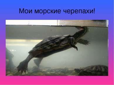 Мои морские черепахи!