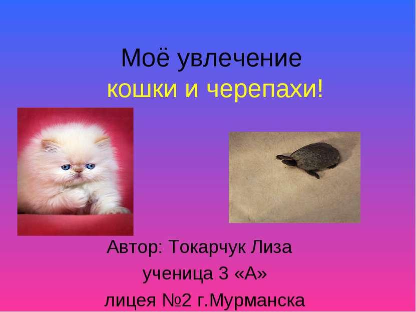 Моё увлечение кошки и черепахи! Автор: Токарчук Лиза ученица 3 «А» лицея №2 г...