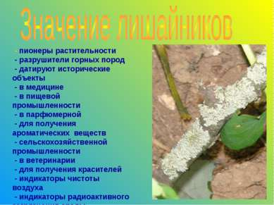 - пионеры растительности - разрушители горных пород - датируют исторические о...