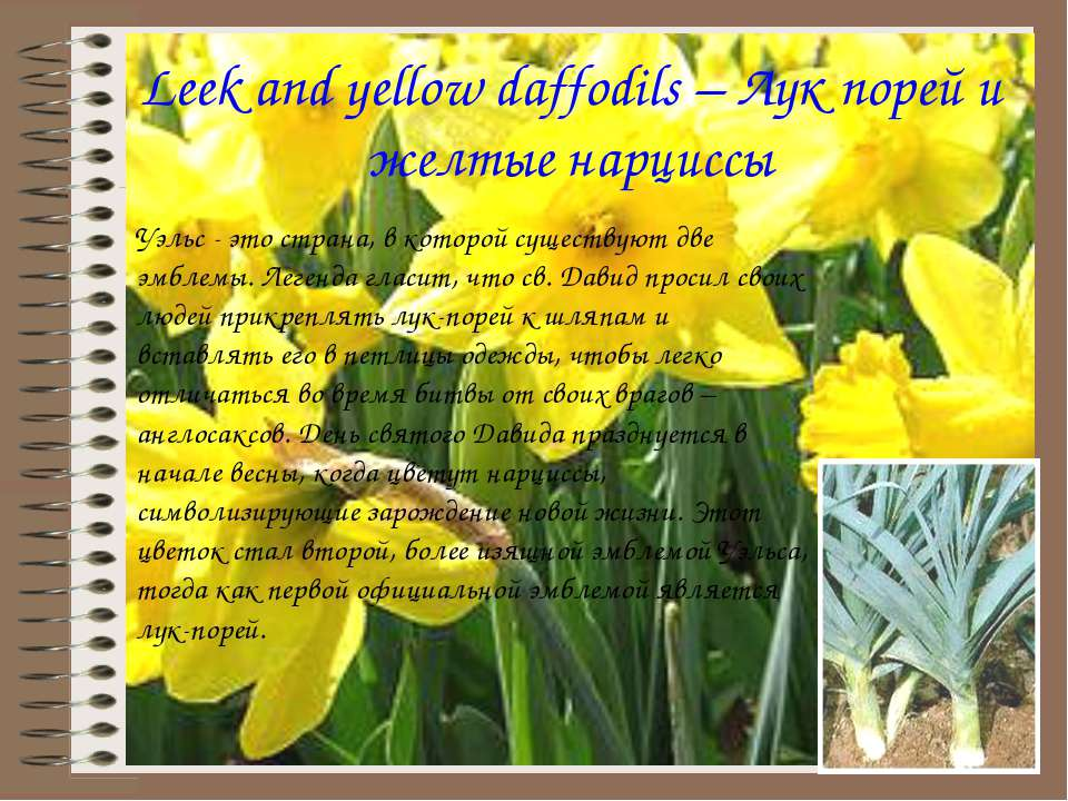 Leek and yellow daffodils – Лук порей и желтые нарциссы Уэльс - это страна, в...
