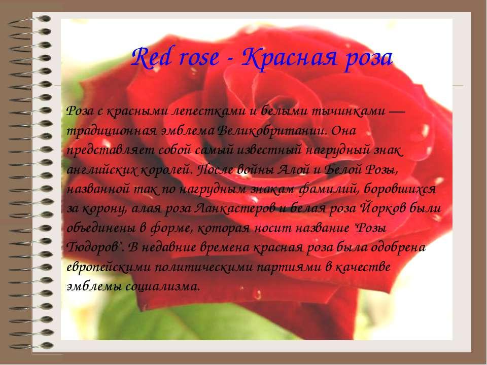 Red rose - Красная роза Роза с красными лепестками и белыми тычинками — тради...