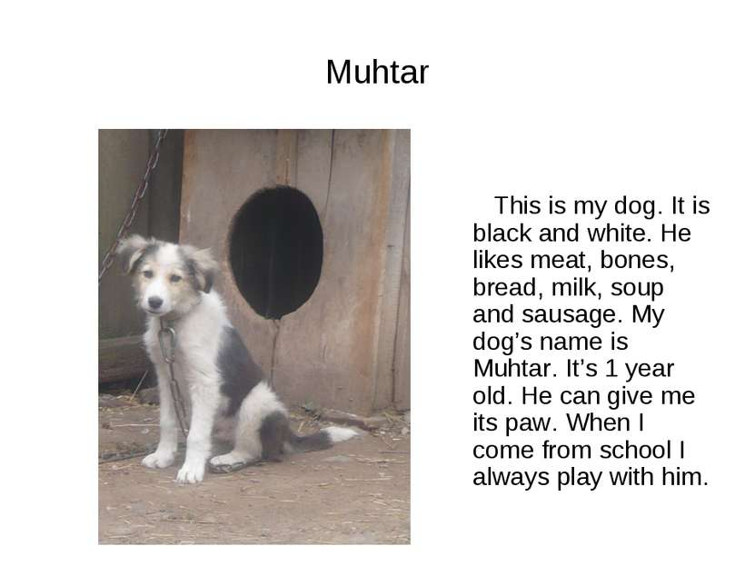 Muhtar This is my dog. It is black and white. He likes meat, bones, bread, mi...