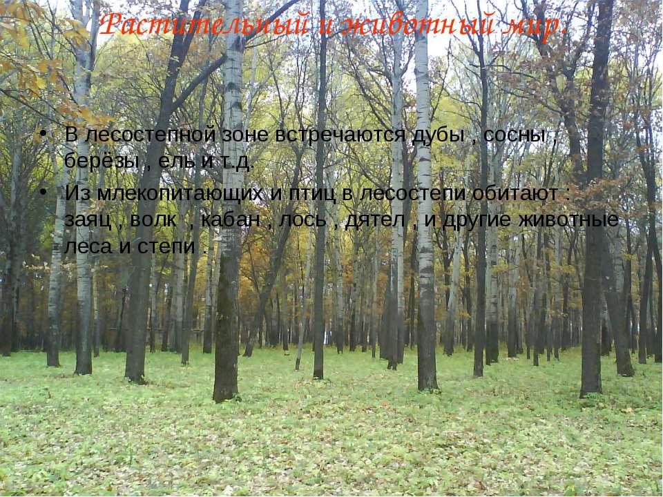 Растительный и животный мир. В лесостепной зоне встречаются дубы , сосны , бе...