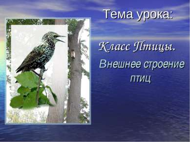 Тема урока: Класс Птицы. Внешнее строение птиц