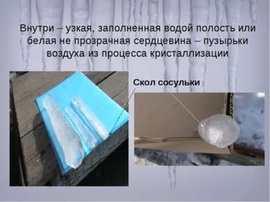 Внутри – узкая, заполненная водой полость или белая не прозрачная сердцевина ...