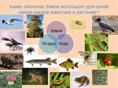 Какие оболочки Земли использует для своей жизни каждое животное и растение?