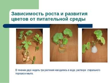 Зависимость роста и развития цветов от питательной среды В течении двух недел...