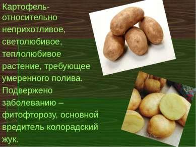Картофель- относительно неприхотливое, светолюбивое, теплолюбивое растение, т...