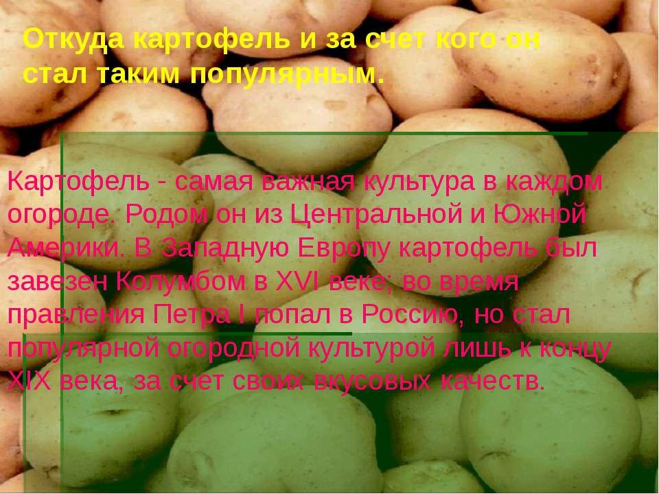 Откуда картофель и за счет кого он стал таким популярным. Картофель - самая в...