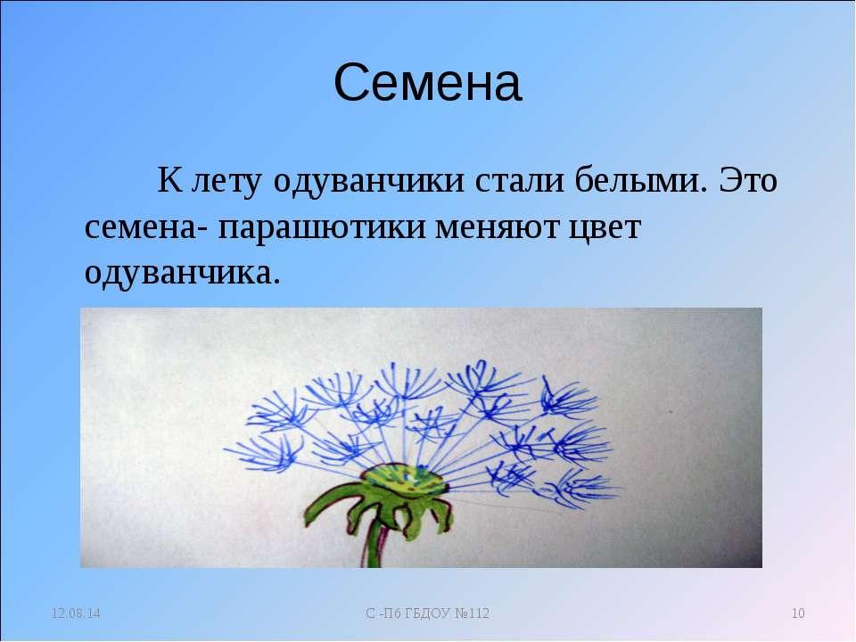 Семена К лету одуванчики стали белыми. Это семена- парашютики меняют цвет оду...
