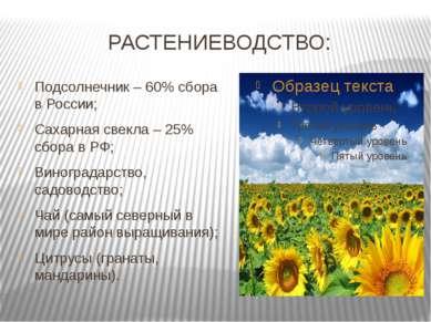 РАСТЕНИЕВОДСТВО: Подсолнечник – 60% сбора в России; Сахарная свекла – 25% сбо...