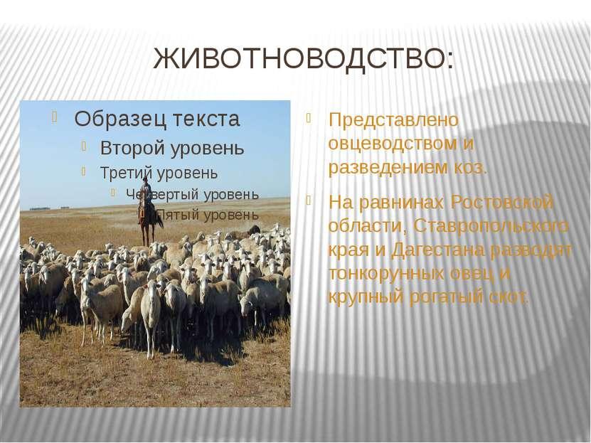 ЖИВОТНОВОДСТВО: Представлено овцеводством и разведением коз. На равнинах Рост...