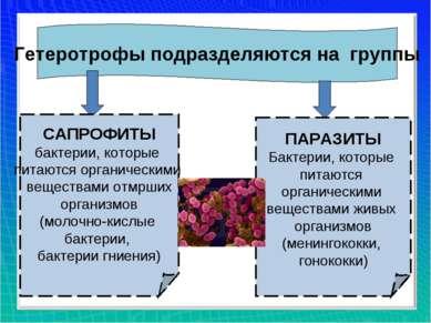 Гетеротрофы подразделяются на группы САПРОФИТЫ бактерии, которые питаются орг...