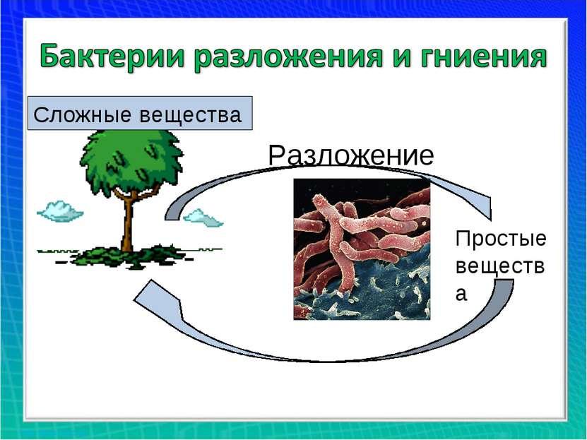 Разложение Сложные вещества Простые вещества