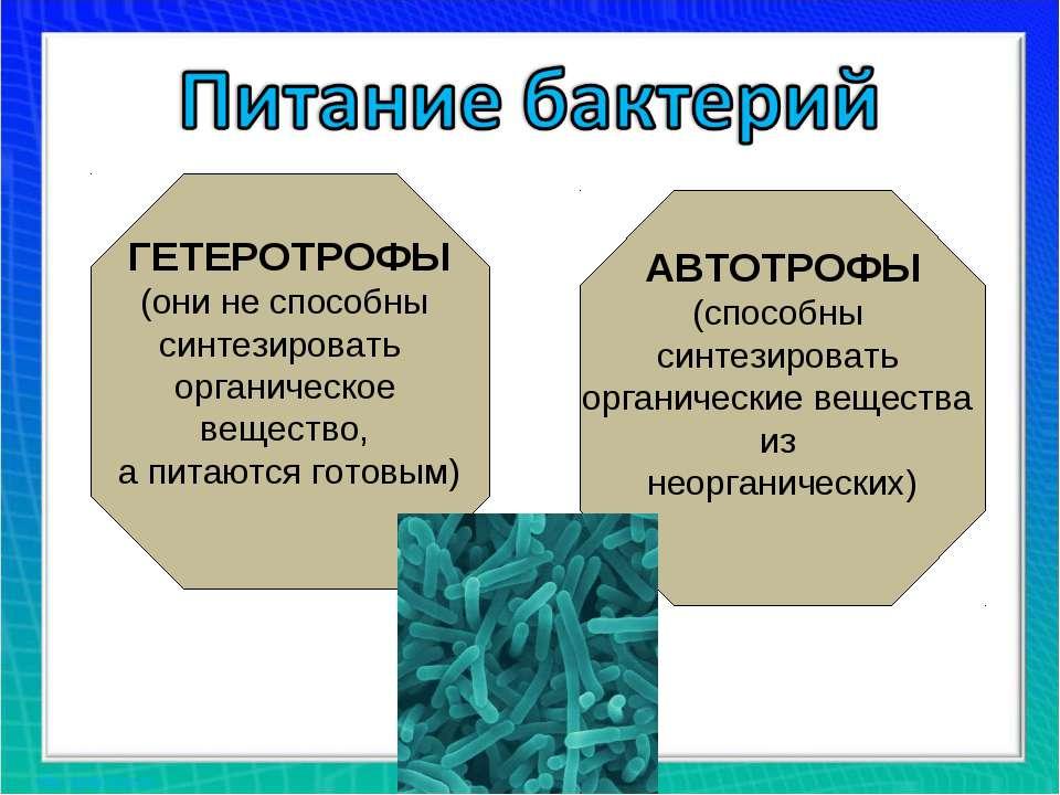 ГЕТЕРОТРОФЫ (они не способны синтезировать органическое вещество, а питаются ...