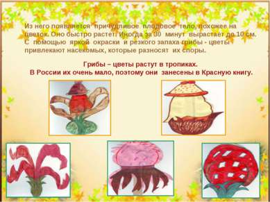 Из него появляется причудливое плодовое тело, похожее на цветок. Оно быстро р...