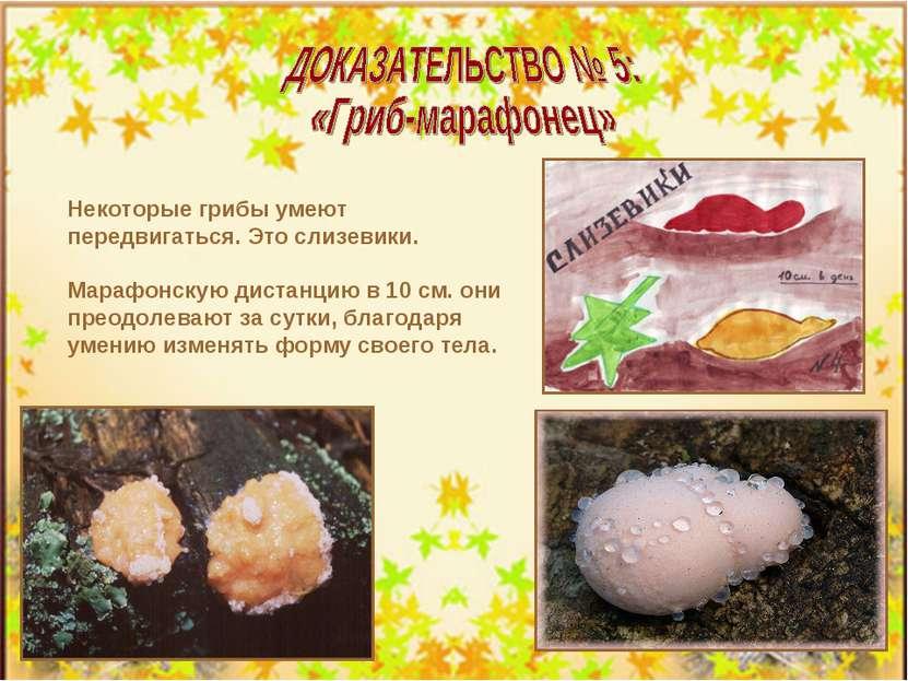 Некоторые грибы умеют передвигаться. Это слизевики. Марафонскую дистанцию в 1...