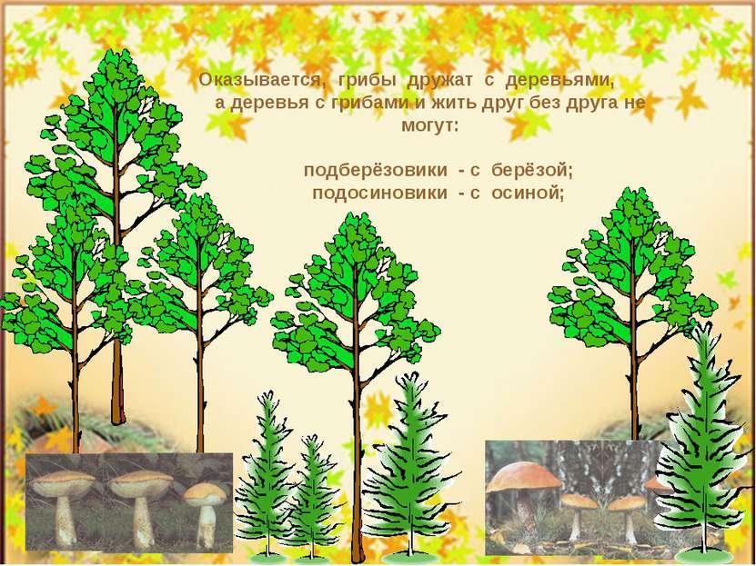 Оказывается, грибы дружат с деревьями, а деревья с грибами и жить друг без др...