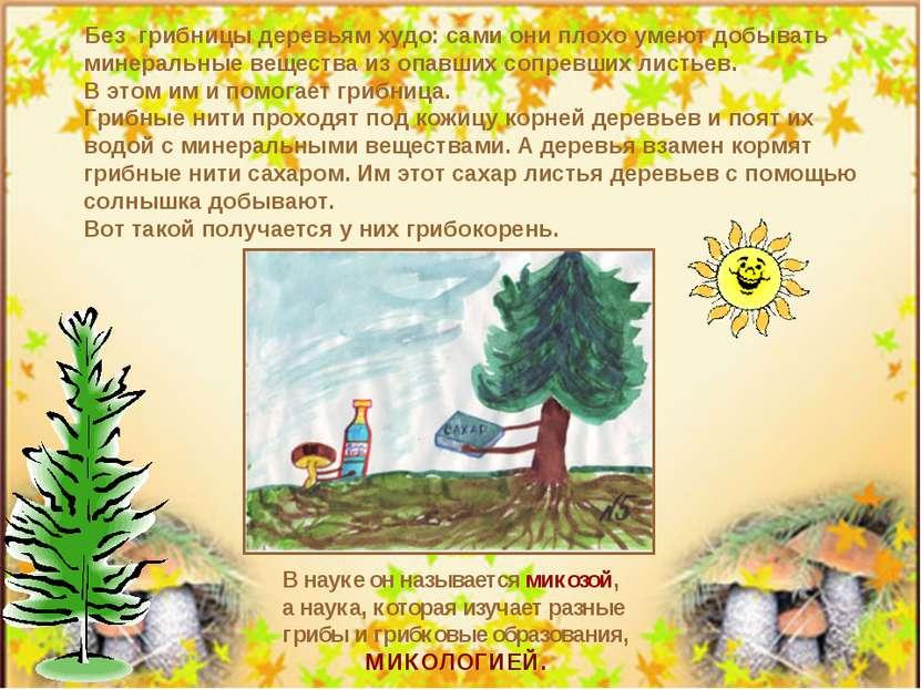 Без грибницы деревьям худо: сами они плохо умеют добывать минеральные веществ...