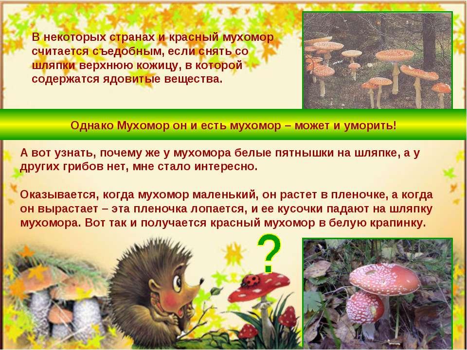 В некоторых странах и красный мухомор считается съедобным, если снять со шляп...