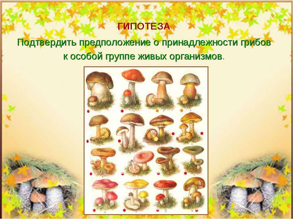 ГИПОТЕЗА Подтвердить предположение о принадлежности грибов к особой группе жи...