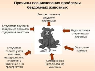 Безответственное владение животными Отсутствие обучения владельцев правилам с...