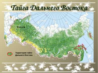 Тайга Дальнего Востока