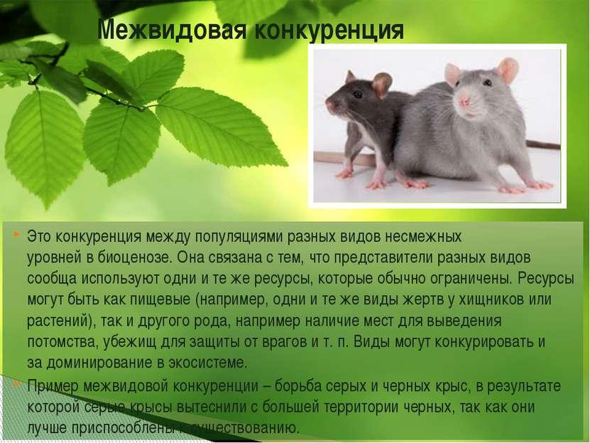 Это конкуренция между популяциями разных видов несмежных уровнейвбиоценозе....