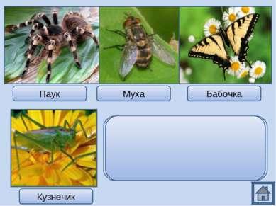 Паук Муха Бабочка Кузнечик Паук относится к классу паукообразных, а муха, баб...