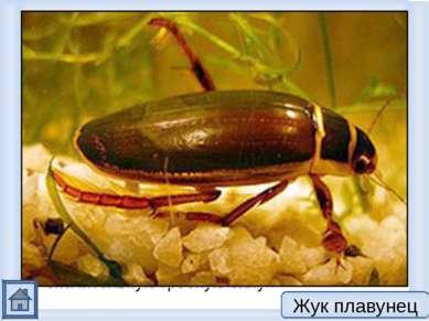 1. Это хищник длина которого примерно 3 см, для которого охота — главное заня...