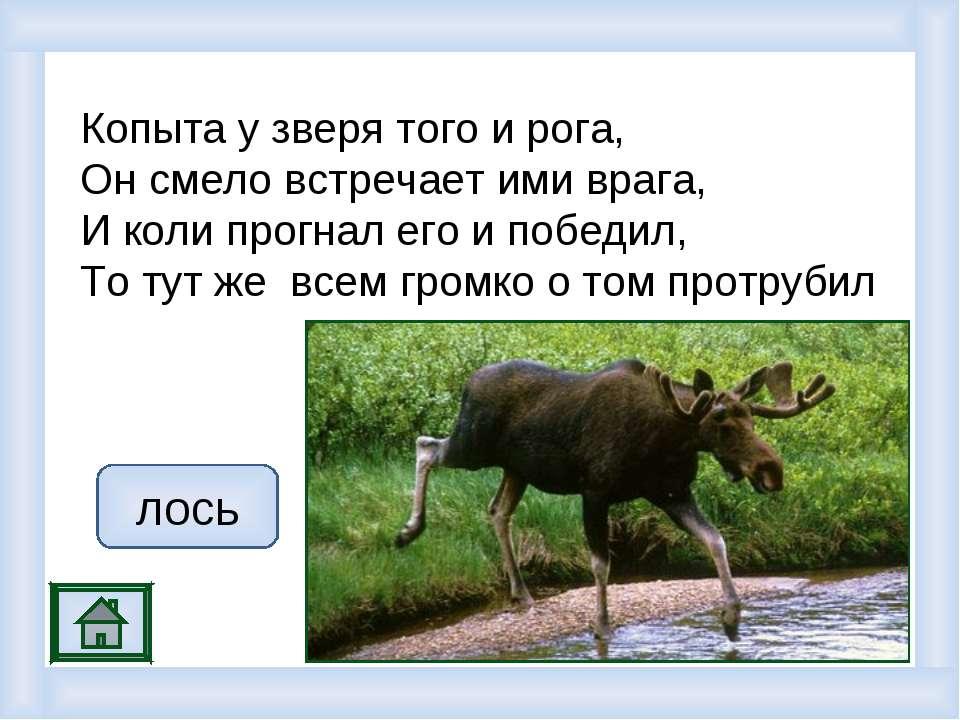 Копыта у зверя того и рога, Он смело встречает ими врага, И коли прогнал его ...