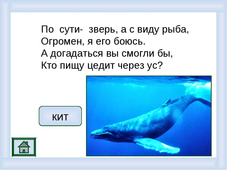 По сути- зверь, а с виду рыба, Огромен, я его боюсь. А догадаться вы смогли б...