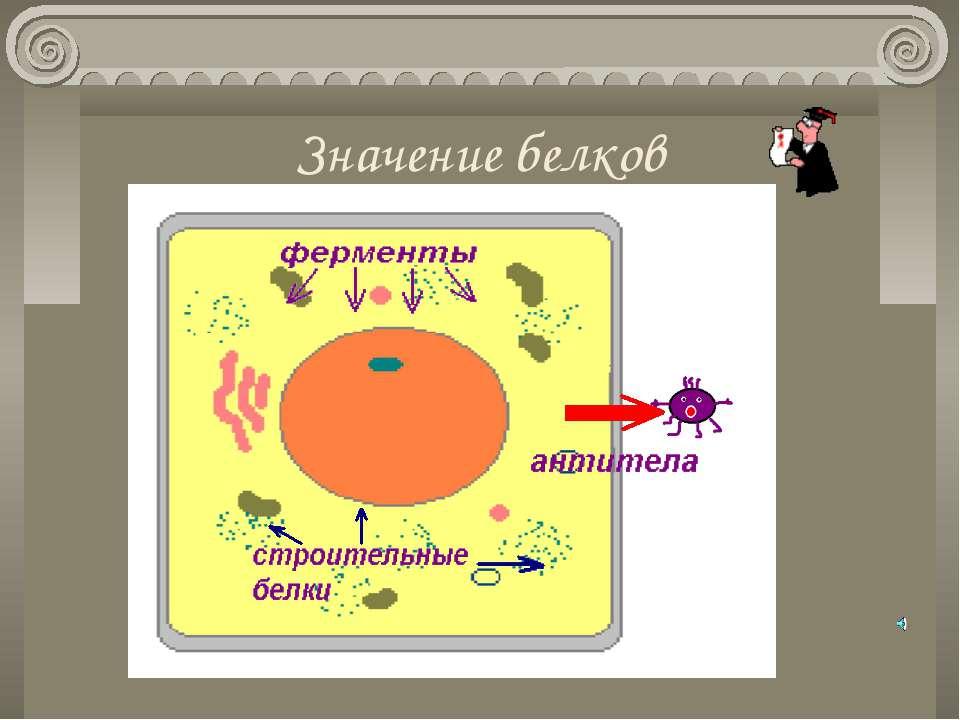 Значение белков