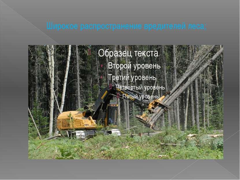 Широкое распространение вредителей леса;