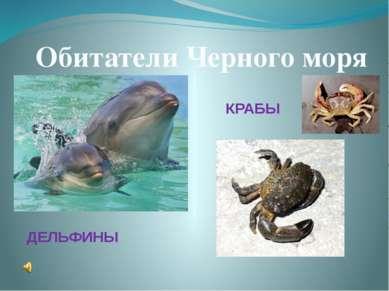 Обитатели Черного моря ДЕЛЬФИНЫ КРАБЫ