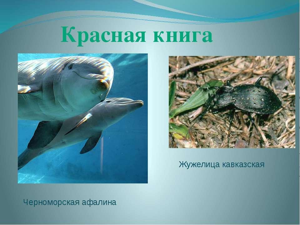 Красная книга Черноморская афалина Жужелица кавказская