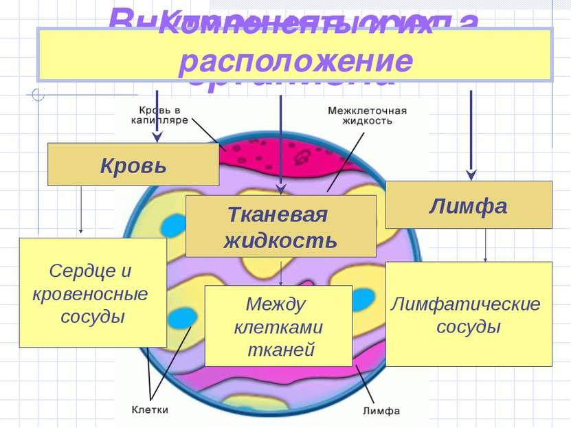 Внутренняя среда организма Компоненты и их расположение Кровь Тканевая жидкос...