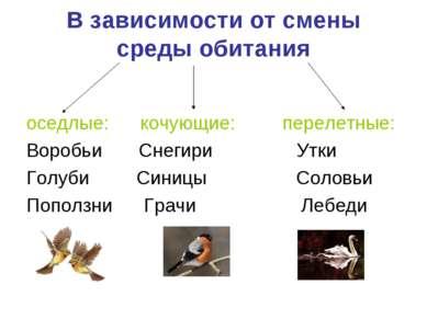 В зависимости от смены среды обитания оседлые: кочующие: перелетные: Воробьи ...