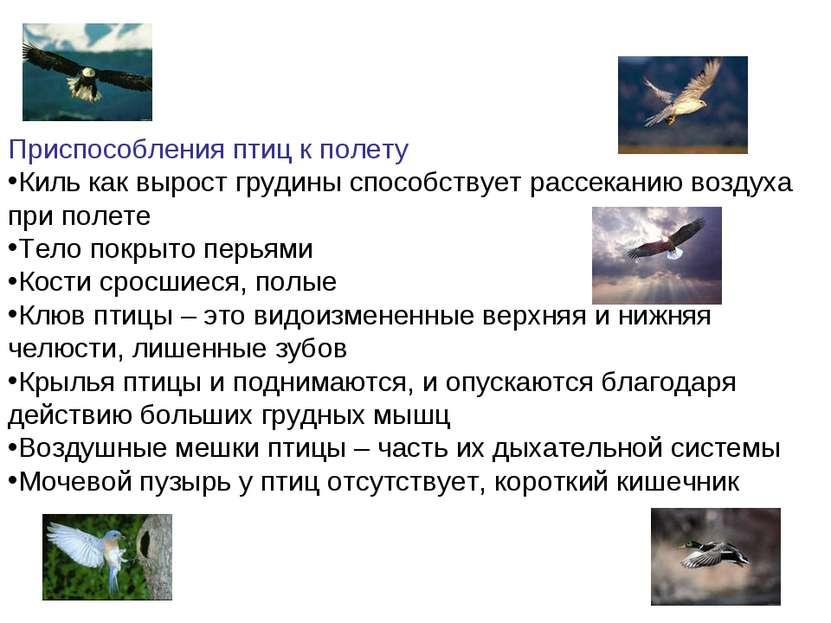 Приспособления птиц к полету Киль как вырост грудины способствует рассеканию ...