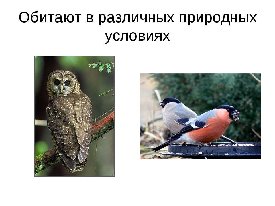 Обитают в различных природных условиях